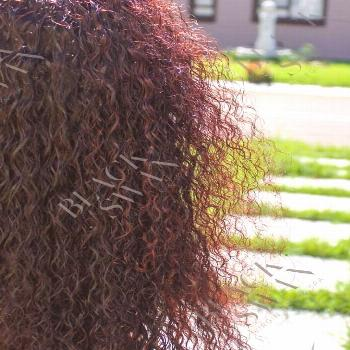 Black Swan Virgin Hair Spa on April 24 2020 tree plant and outdoo