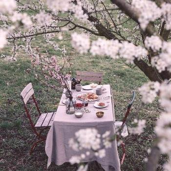 on April 23 2020 flower plant tree table outdoor and nature