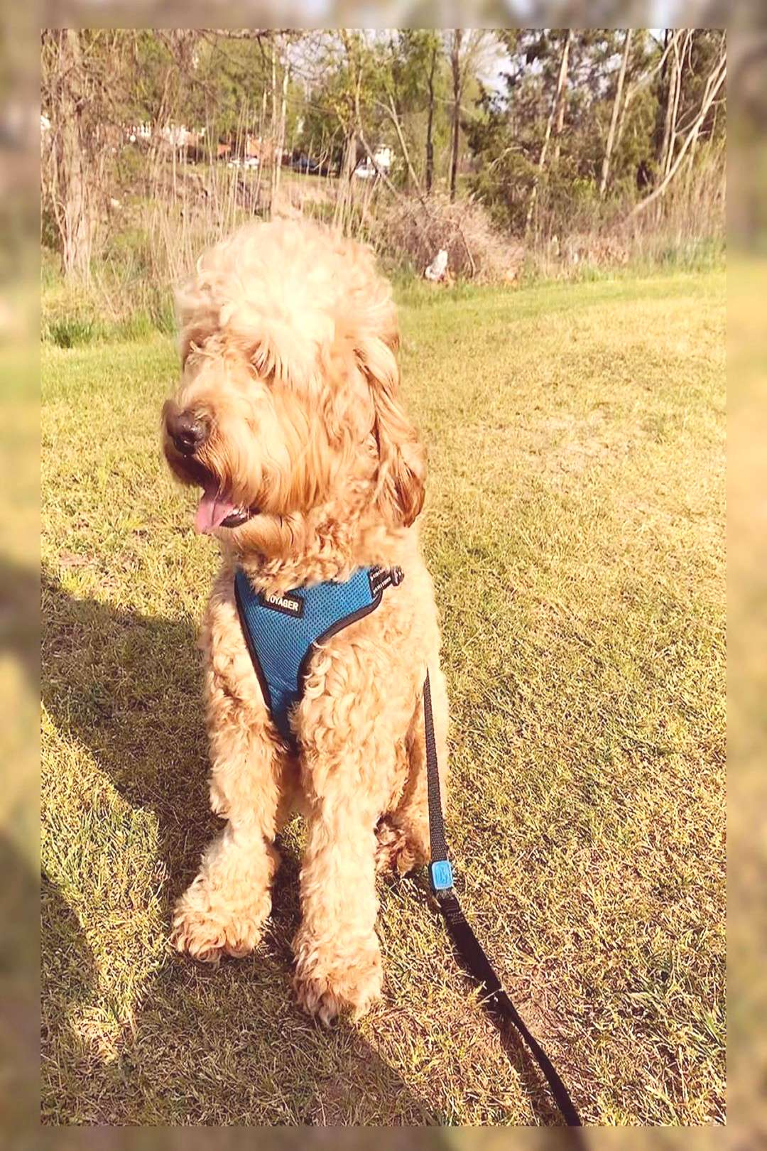 georgetheminidood on April 20 2020 dog outdoor and nature