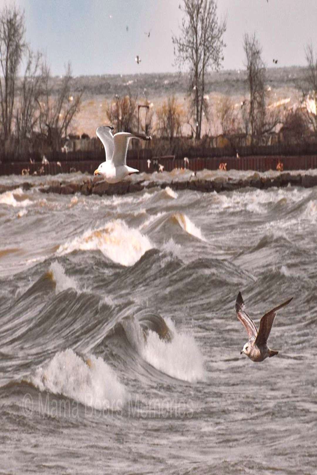 Jill Halasz on April 21 2020 seagulls sky water outdoor and natur