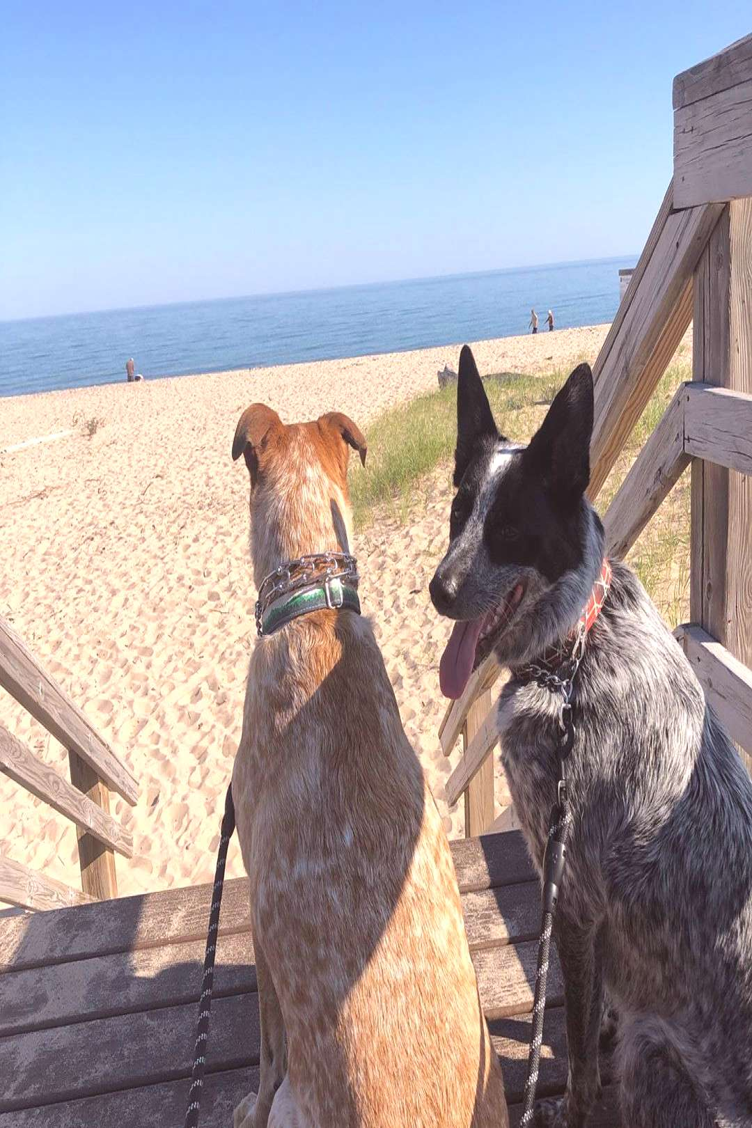Penneau Pack on April 22 2020 dog sky ocean outdoor water and nat
