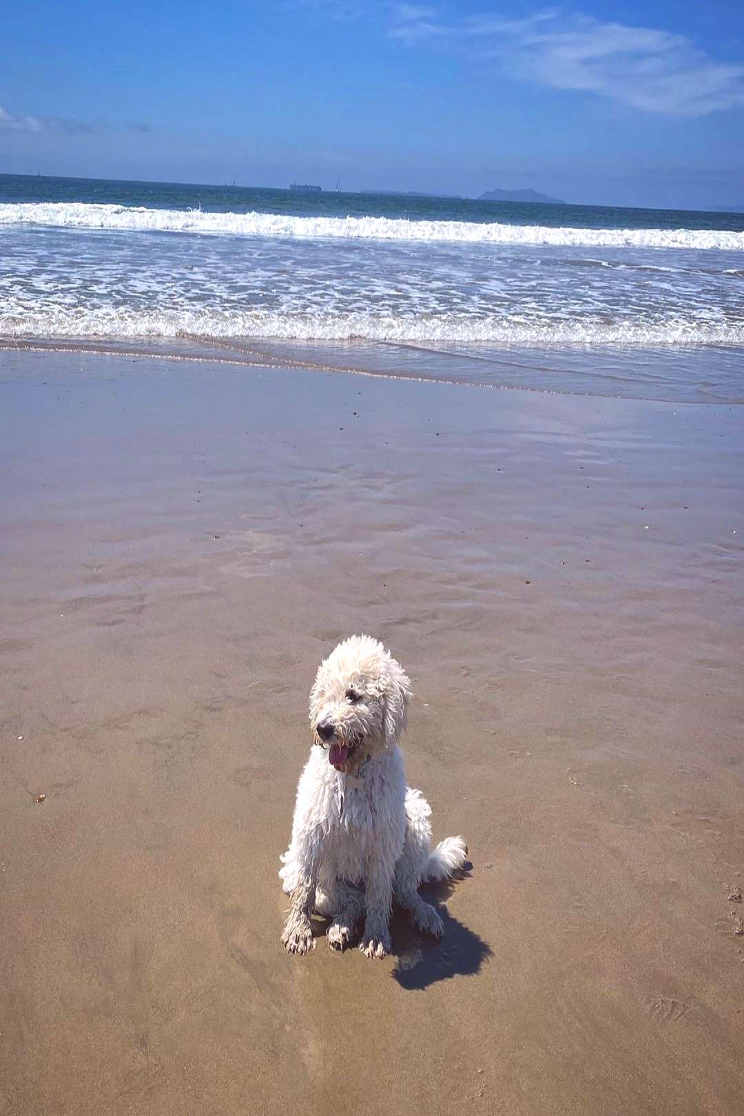the Labradoodle on April 20 2020 dog ocean sky outdoor water and