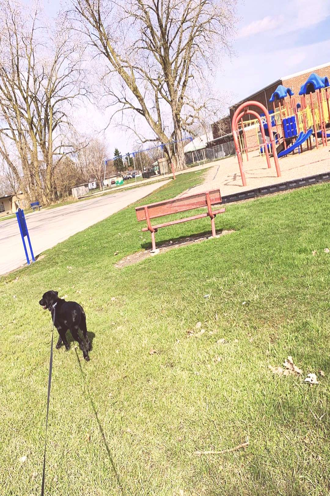 Toostie Pop on April 20 2020 tree grass sky dog outdoor and natur